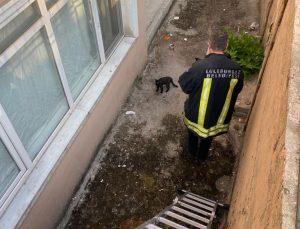 Apartman boşluğunda mahsur kalan kedi itfaiye ekiplerince kurtarıldı