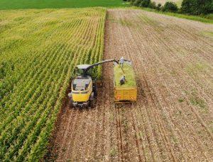Devlet destek verdi, mısır üretimi arttı