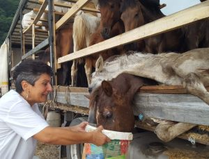 Hasta atlarla sınırı geçemeyeceğini anlayınca Hopa'daki tır parkında atları kaderine terk etmiş