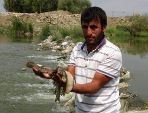 Karasu Nehri'nde toplu balık ölümü