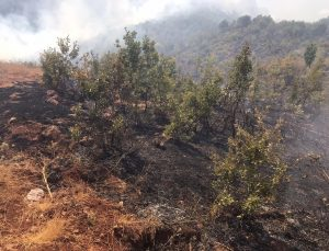 Siirt'teki orman yangını kontrol altına alındı