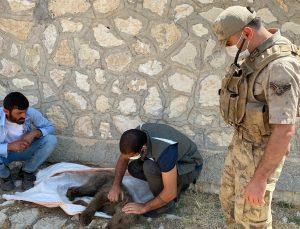Yaralı yavru ayıyı önce beslediler, ardından tedavi edilmesi için ekiplere teslim ettiler