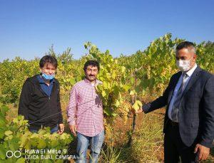 """""""Bağcılıkta Tarımsal Üretimin Artırılması"""" projesi hayata geçti"""