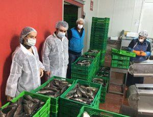 Bilecik'ten Çek Cumhuriyeti ve Rusya'ya alabalık ihracatı
