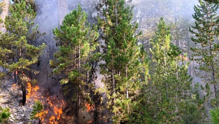 Burdur'daki orman yangını büyümeden söndürüldü