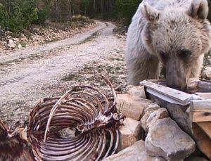 Erzurum'un yaban hayatını ormana kurduğu fotokapanla görüntüledi