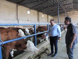 Hayvancılık işletmesi ziyaret edilerek incelendi