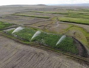 Kars'ta çiftçiler silajlık mısır ekimine yöneldi