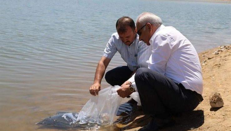 Kırıkkale'de 100 bin pullu sazan yavrusu gölete bırakıldı