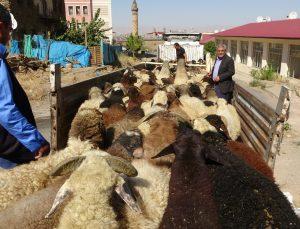 Muş'tan büyük şehirlere kuzu sevkiyatı