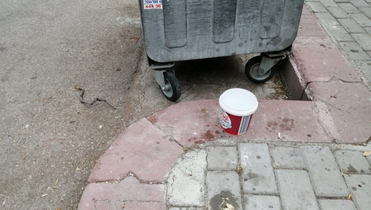 (Özel) Sokak hayvanları için konulan su ve mamaları döken komşusu çıktı