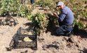 Siirtli çiftçiler devlet desteğiyle pestil yapmaya başladı