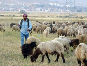 Yüksekova'da kuraklık çobanları da vurdu