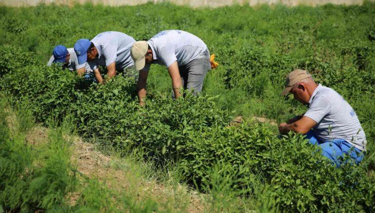 Posacı'dan çiftçilere müjde